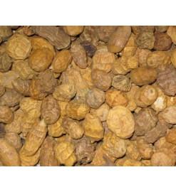 Tygrí orech POSEIDON 1,25kg