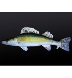 Plyšová ryba ZUBÁČ 77cm